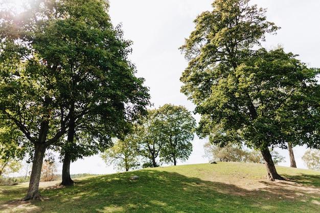 Große, malerische grüne bäume im park werfen einen schatten auf einen herrlichen rasen