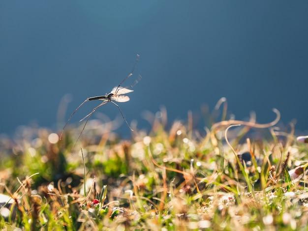 Große mücke im flug. eine sich bewegende mücke. weicher fokus.
