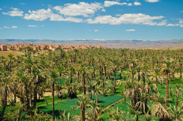 Große oase mit palmen im draa-tal, sahara, atlas-berge, marokko