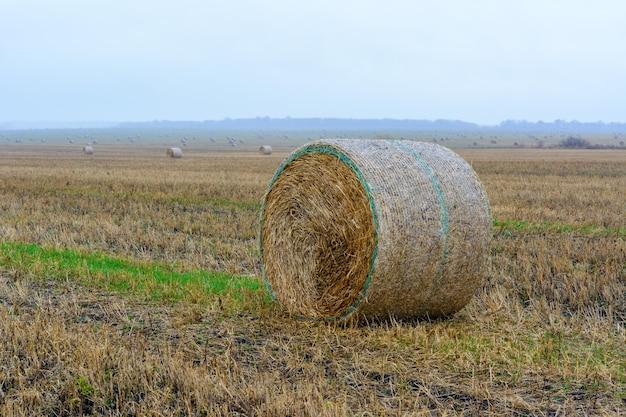 Große runde heuballen auf dem feld nach der ernte. die strohballen auf der wiese am regnerischen tag.