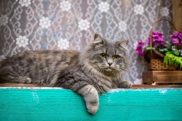 Große schöne flauschige graue süße katze am fenster im dorf
