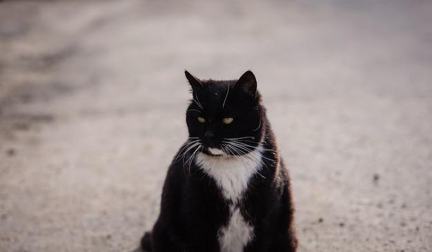 Große schwarze katze mit langem schnurrbart auf der straße