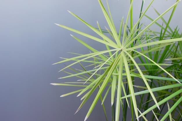 Große stachelige tropische pflanze