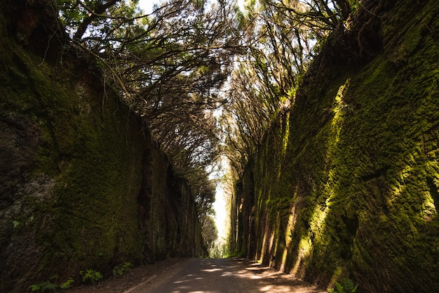 Große vegetation im wald