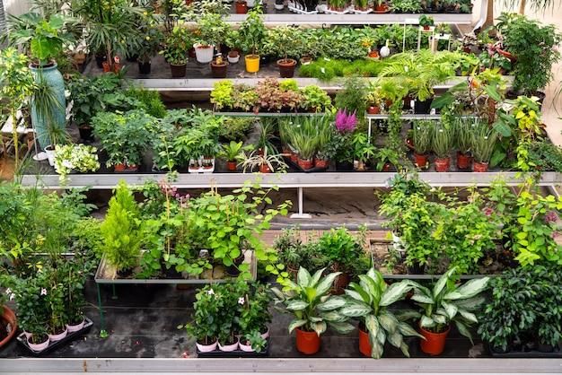 Große vielfalt an pflanzen und blumen im botanischen gewächshaus