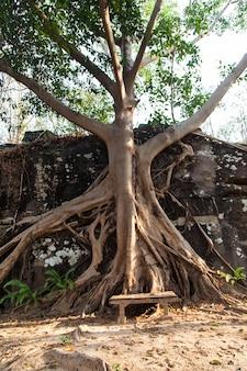 Großer banyanbaum mit wurzeln im felsen in den wäldern von thailand.