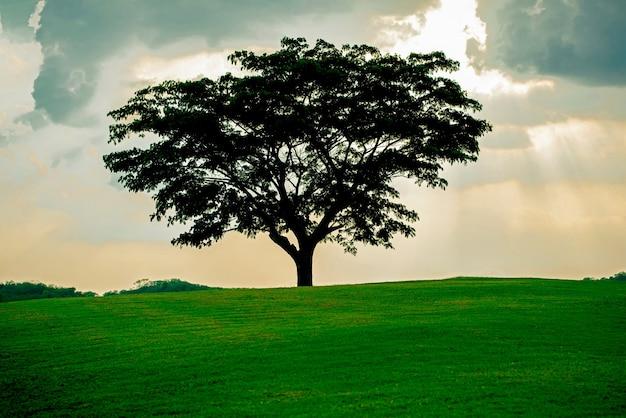 Großer baum allein auf der wiese. baum und grüne wiese, blau und gelb am himmel, highlight im sonnenuntergang