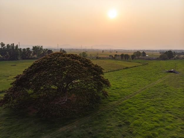 Großer baum im grünen landwirtschaftsbauernhof