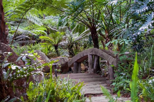 Großer baumfarn auf regenwald am siriphum-wasserfall mit steinbrücken- und steingehweg an nationalpark doi inthanon, chiang mai, thailand.