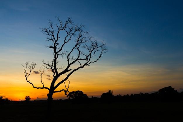 Großer baumschattenbildsonnenuntergang-himmelhintergrund