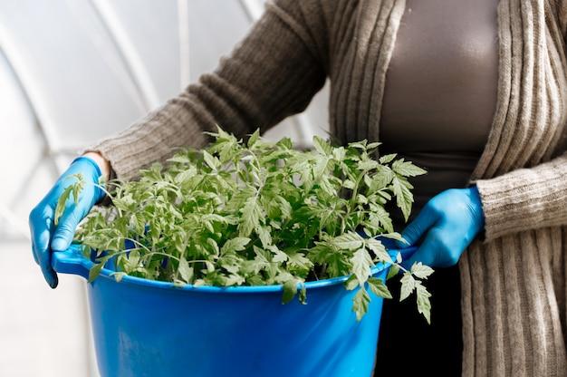 Großer behälter mit tomatensämlingen in den händen der frau