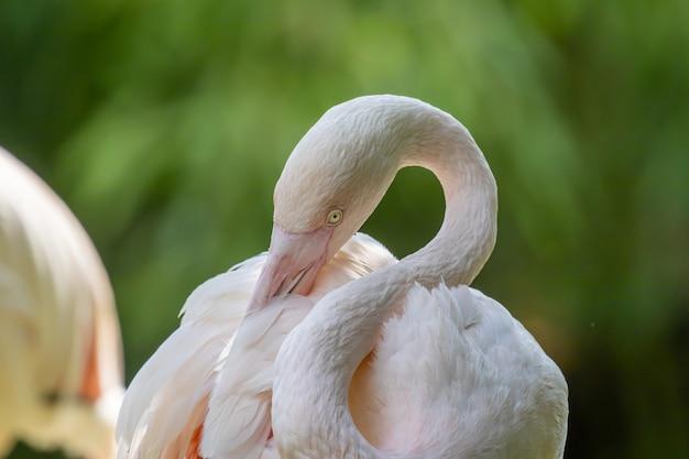 Großer flamingo nahaufnahmeporträt