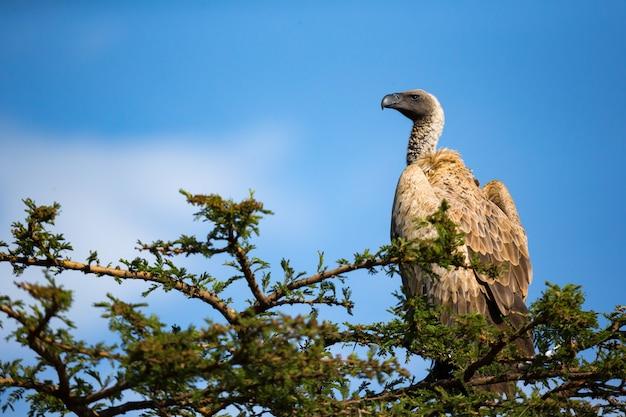 Großer greifvogel sitzt auf einem ast