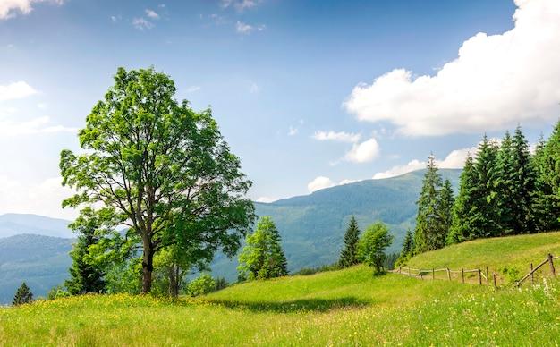 Großer grüner baum, der auf graswiese in den bergen steht