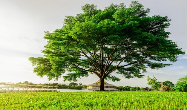 Großer grüner baum mit schönen zweigen im park. grünes grasfeld nahe see und wasserrad. rasen im garten im sommer mit sonnenlicht. großer baum auf grünem grasland. naturlandschaft.