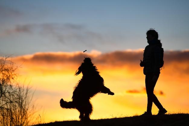 Großer hund, der springt, um einen keks von einer frauensilhouette mit oberfläche bei buntem sonnenuntergang zu nehmen