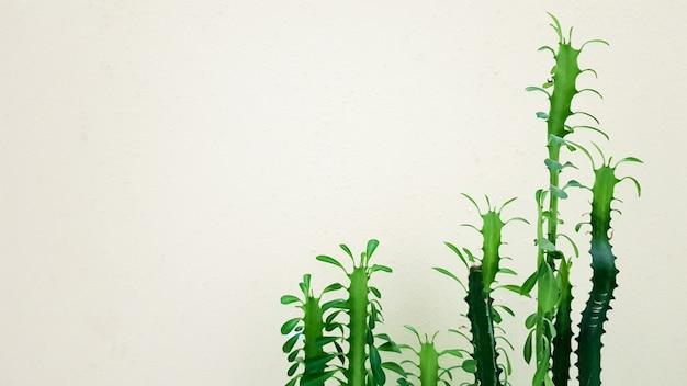 Großer kaktus in einem topf. stachelige pflanze im sonnenlicht nahe der wand.