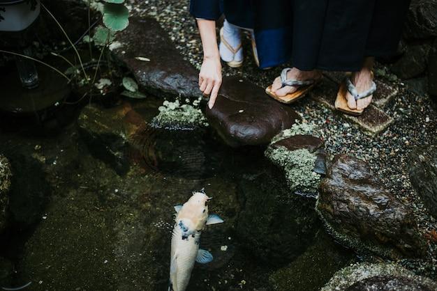 Großer koi-fisch in einem japanischen garten