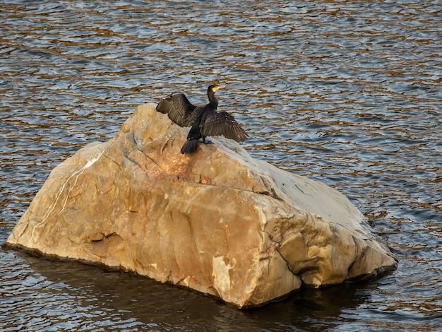 Großer kormoran thront auf einem felsen in einem fluss.