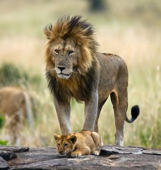 Großer männlicher löwe mit jungtier. nationalpark. kenia. tansania. masai mara. serengeti.