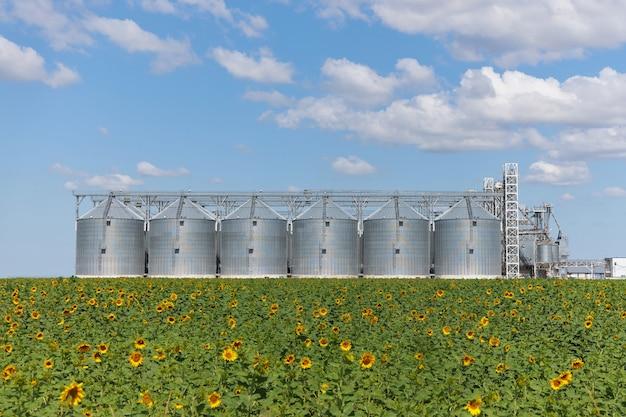 Großer moderner weizenaufzug, getreidespeicher und feld mit sonnenblume