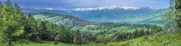 Großer panoramablick auf die bergtaiga, altai, sommergrüns von wäldern und wiesen, schneegipfel