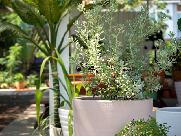 Großer runder betontopf mit grünpflanzen im garten. Premium Fotos