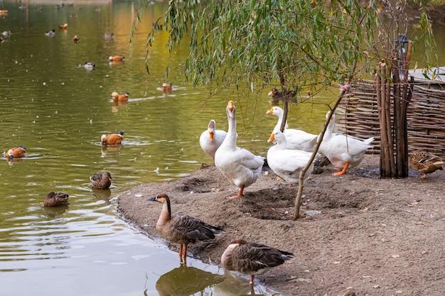 Großer teich mit vielen vögeln