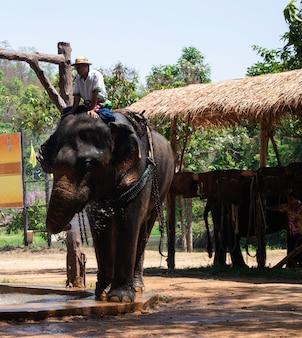 Großer thailändischer elefant im elefantenschutzzentrum