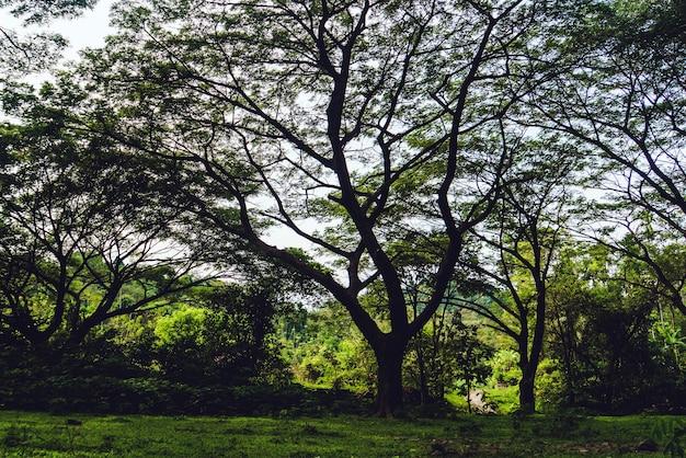 Großer üppiger crohn-baum im park zwischen büschen und getrocknetem gras. ein großer baum verdunkelt den blauen himmel