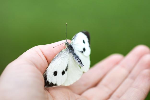Großer weißkohlschmetterling oder pieris brassicae auf einer hand sitzend