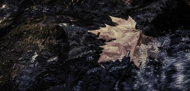 Großes ahornblatt gefallen auf den felsen im wasser in der bewegung des baches