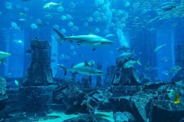 Großes aquarium in dubai, vereinigte arabische emirate