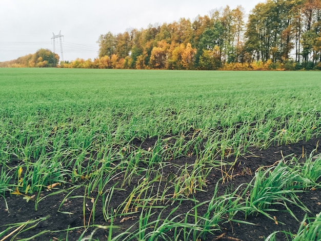 Großes feld mit jungem grünem gras bei bewölktem wetter 1