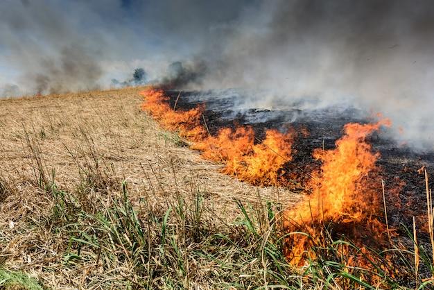 Großes feuer im landwirtschaftlichen bereich, rauchverschmutzung. trockenes schilf und gras verbrennen.