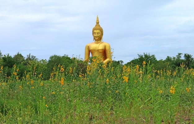 Großes goldenes buddha-bild mit gelbem blumenfeld im vordergrund, provinz ang thong, thailand