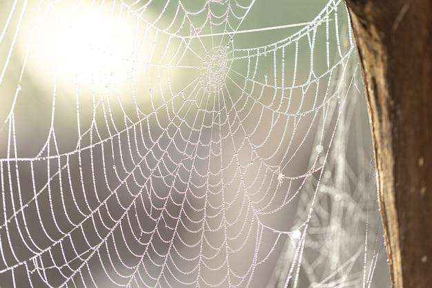 Großes spinnennetz mit morgentautropfen in der frühen morgensonne.