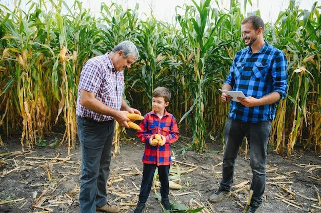 Großvater, sohn und enkel, die im maisfeld arbeiten. familienbetrieb.