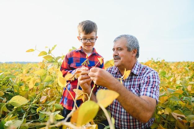 Großvater und enkel kontrollieren die sojaernte. konzept für menschen, landwirtschaft und landwirtschaft.