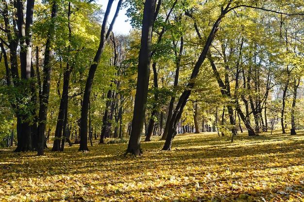 Grün-gelber teppich aus herbstblättern mit schatten von bäumen im stadtpark.