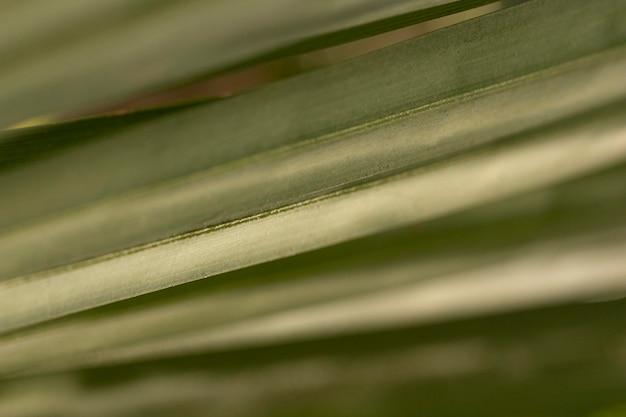 Grün hinterlässt organischen hintergrund