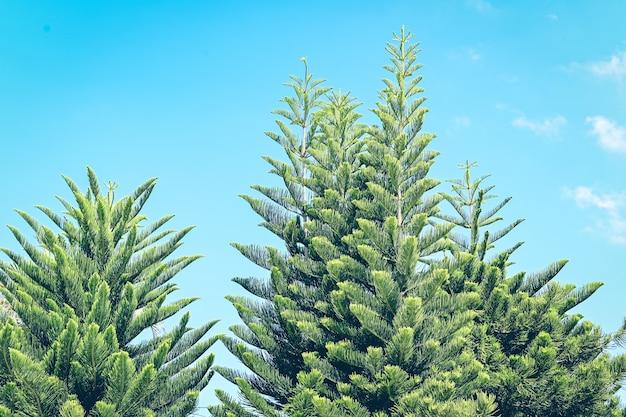 Grün lässt baumkrone