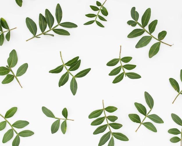 Grün lässt den zweig, der auf weißem hintergrund lokalisiert wird