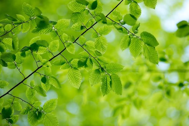 Grün lässt hintergrund am sonnigen tag