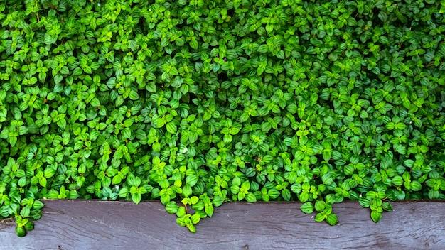 Grün lässt wand im freien