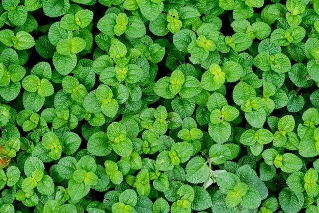 Grün lässt wand