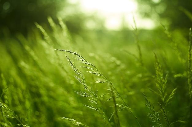 Grün verschwommener raum und sonnenlicht