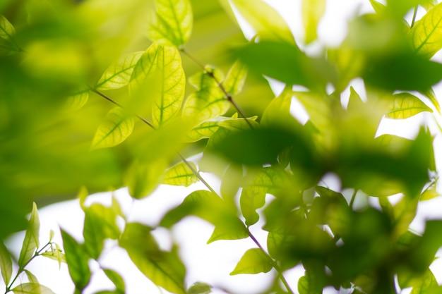 Grün verwischt von naturhintergrund oder -hintergrund mit farbe und hellem sonnenlicht