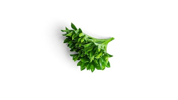Grün. zweige der gekräuselten petersilie auf einem weißen hintergrund. makrofoto. hochwertiges foto