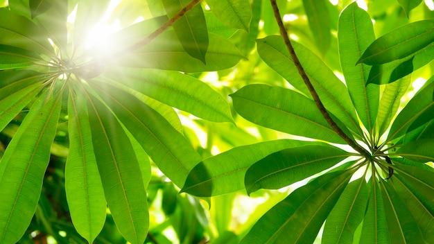 Grünblätter auf baum mit sonnenlichtdurchlauf.